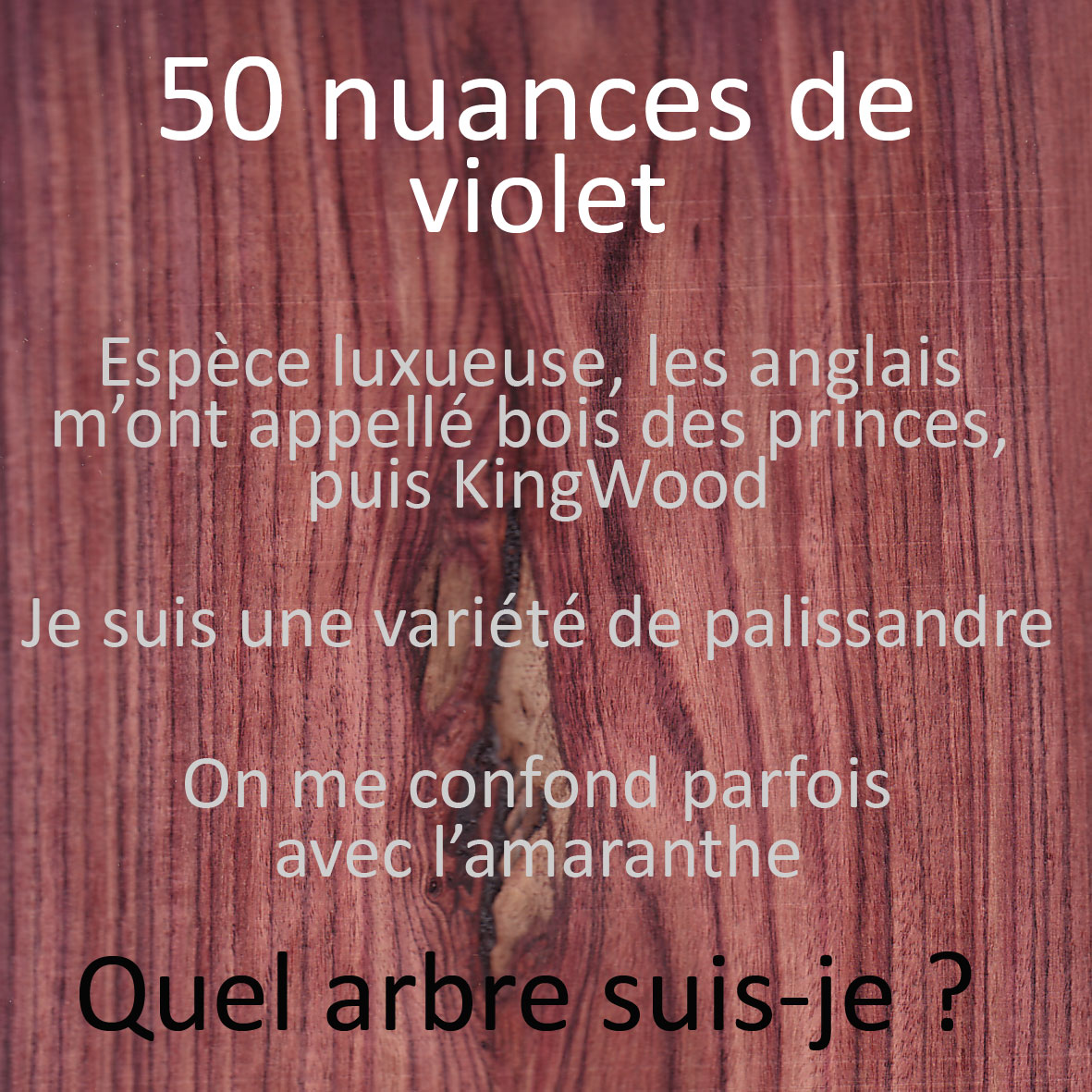 quiz essences de bois 50 nuances de violet ecoute le bois. Black Bedroom Furniture Sets. Home Design Ideas