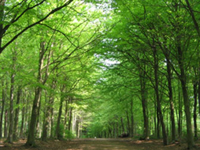 savez vous reconna tre les arbres en for t ecoute le bois. Black Bedroom Furniture Sets. Home Design Ideas